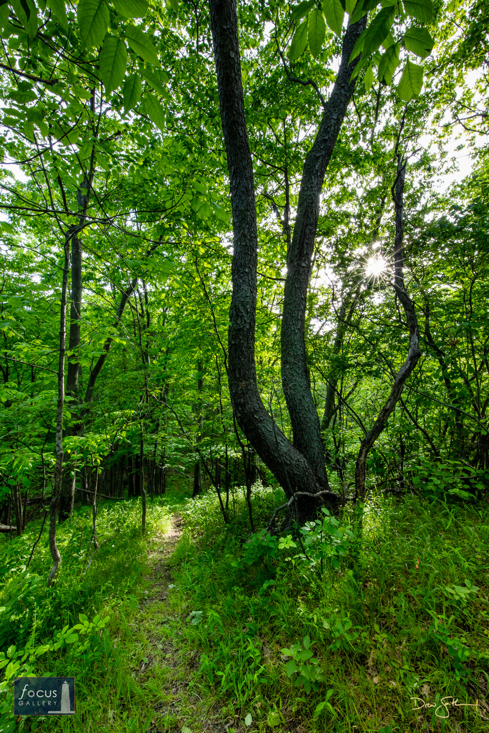 Photo © Drew Smith Trees and forest near the top of Mount Minnie.