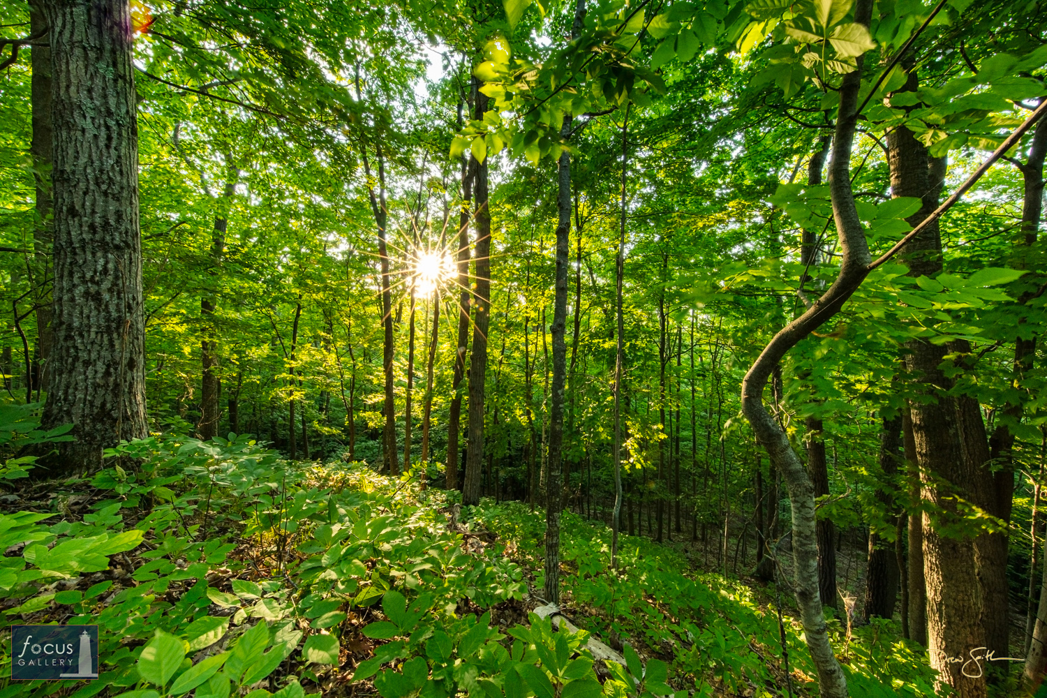 Photo © Drew Smith The afternoon sun shines through the canopy at Mount Minnie Nature Preserve. This image was taken on land...