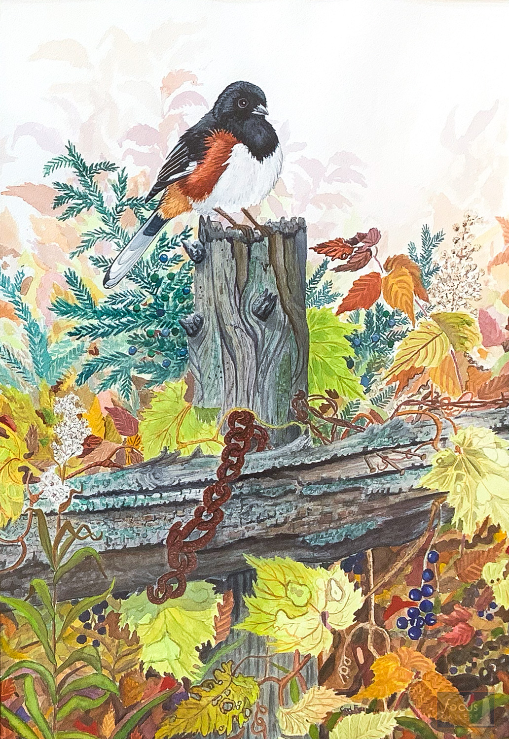 Original watercolor painting of an Eastern Towhee bird on an old wooden fence.