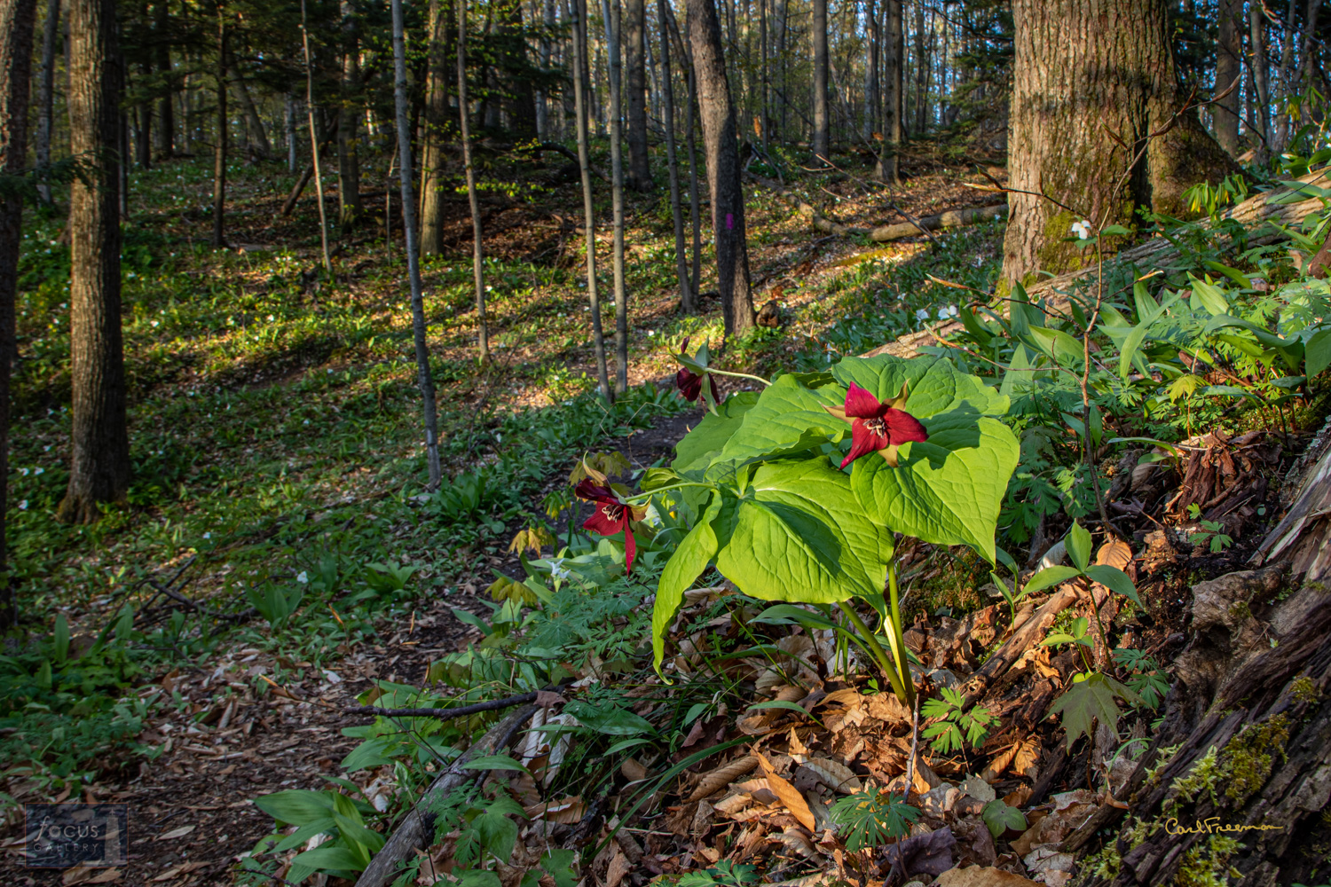 Photo © Carl Freeman Somewhere in Arcadia Dunes: The CS Mott Nature Preserve. As I lay on the ground waiting for the light to...