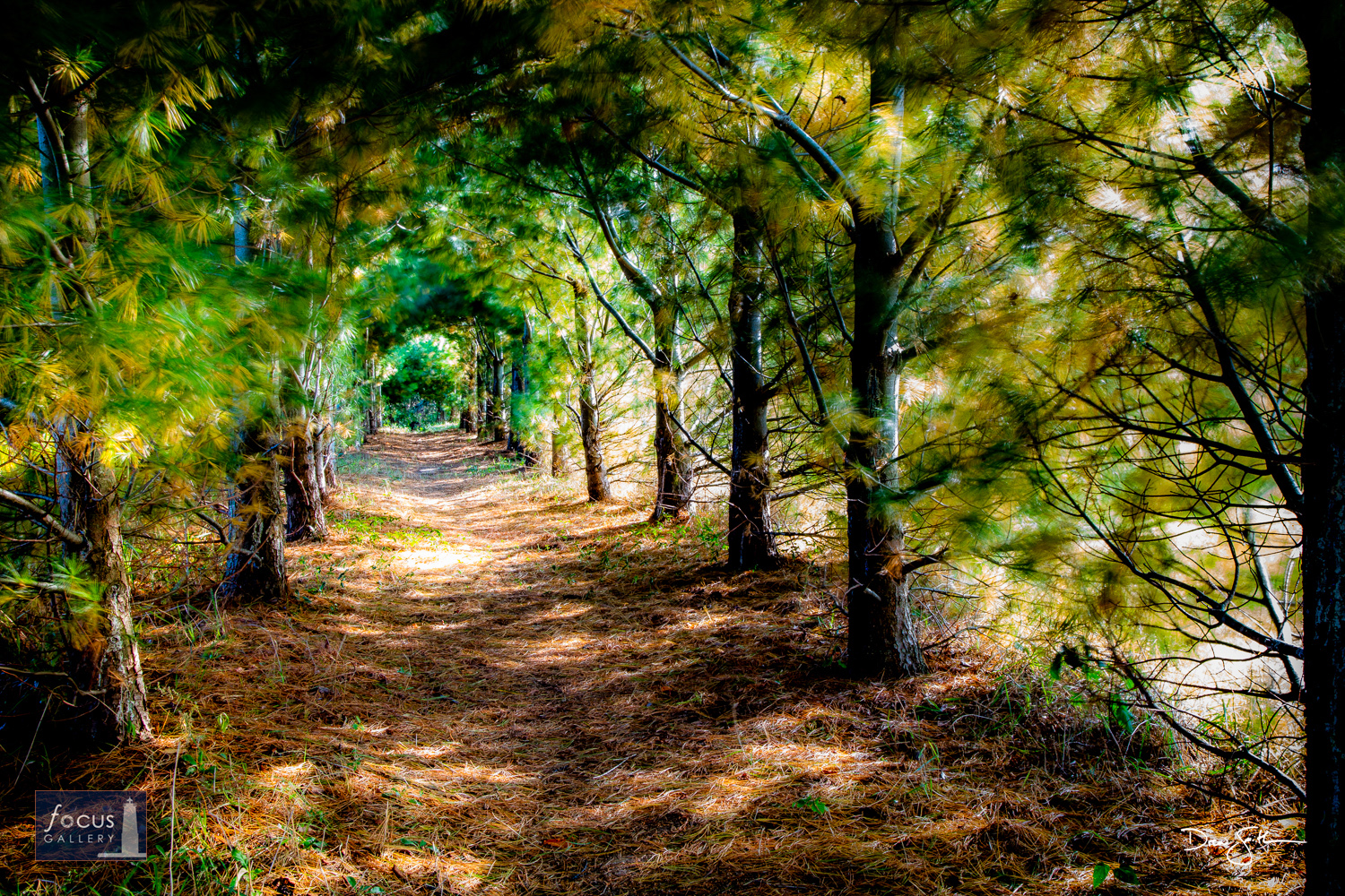 Photo © Drew Smith Located on private property, this tunnel of trees has been in the works for 15 years.  It is nearly invisible...
