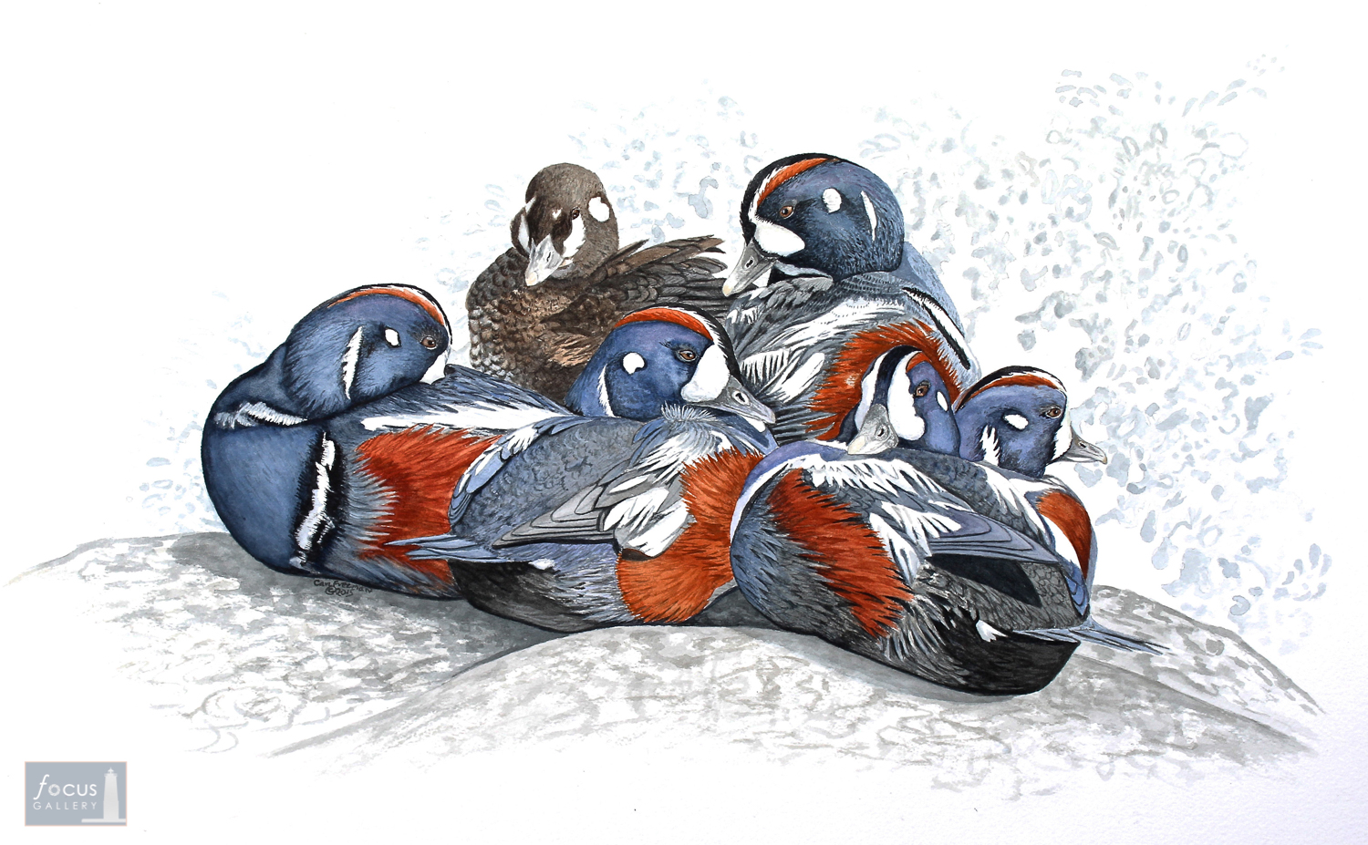 Original watercolor painting of a group of Harlequin Ducks sitting together.