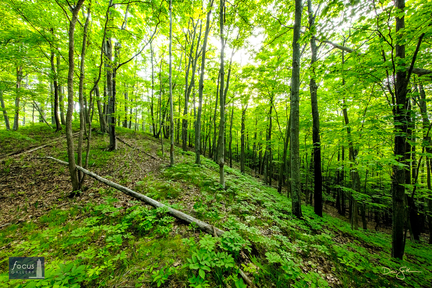 The topography at Mount Minnie, located between Platte and Little Platte Lakes, is very hilly with wonderful trails through woods...