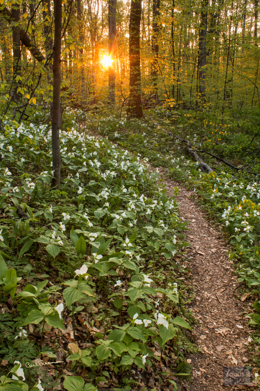 Photo © Carl Freeman Pete's Woods - Swamp Road Trailhead in Arcadia Dunes. This image was taken on land protected by the Grand...