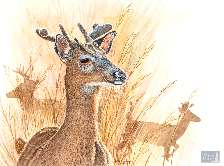 Original watercolor painting of White-tailed Deer bucks with velvet antlers.