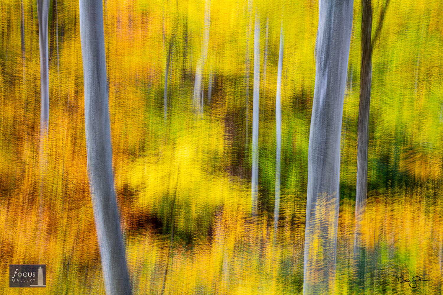 Photo © Drew Smith On an autumn hike at the Whaleback Natural Area I was struck by the colors of the trees and the shapes made...