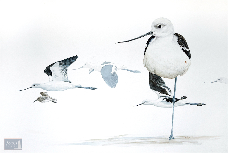Original watercolor painting of avocet shorebirds.