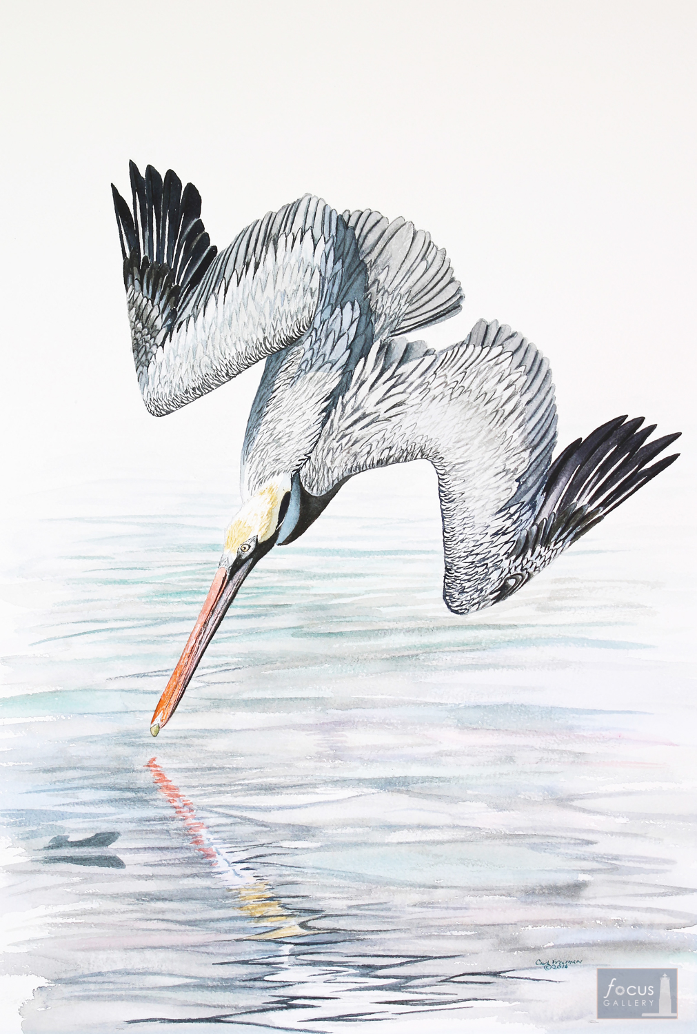 Original watercolor painting of a Brown Pelican bird diving into the water while fishing.